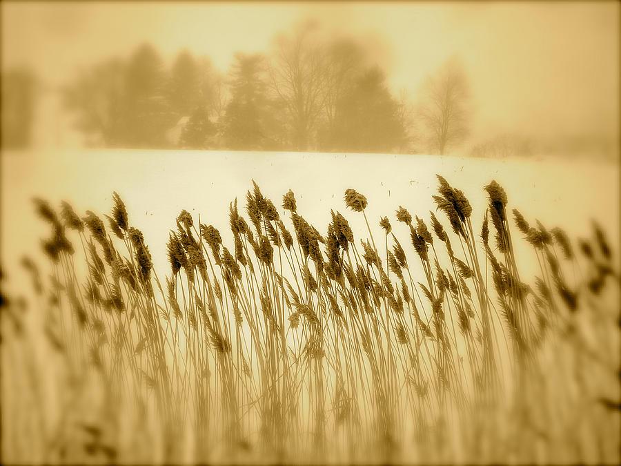 Landscape Photograph - Dancing by Arthur Barnes