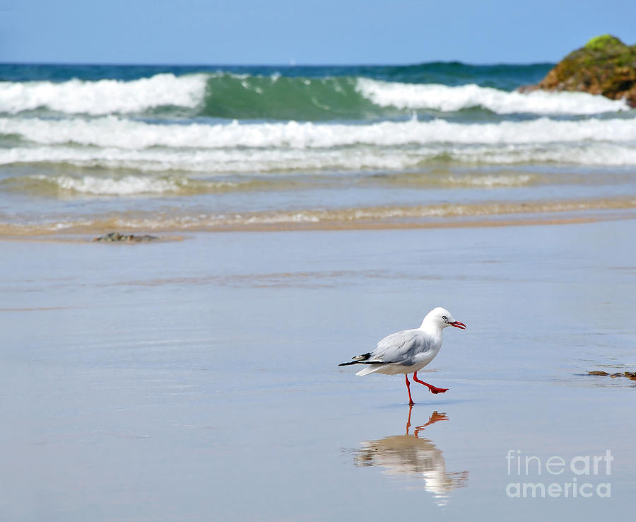 Seagull Photograph - Dancing On The Beach by Kaye Menner