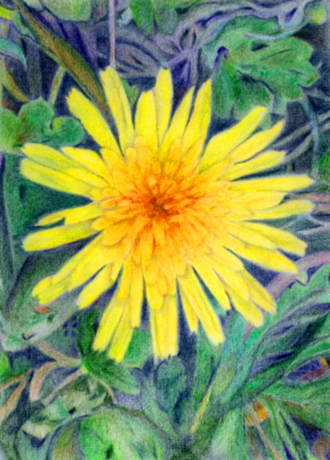 Dandelion Drawing - Dandelion by Linda Pope