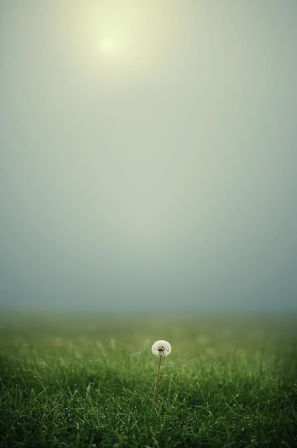Vertical Photograph - Dandelion On Meado by Elisabeth Schmitt