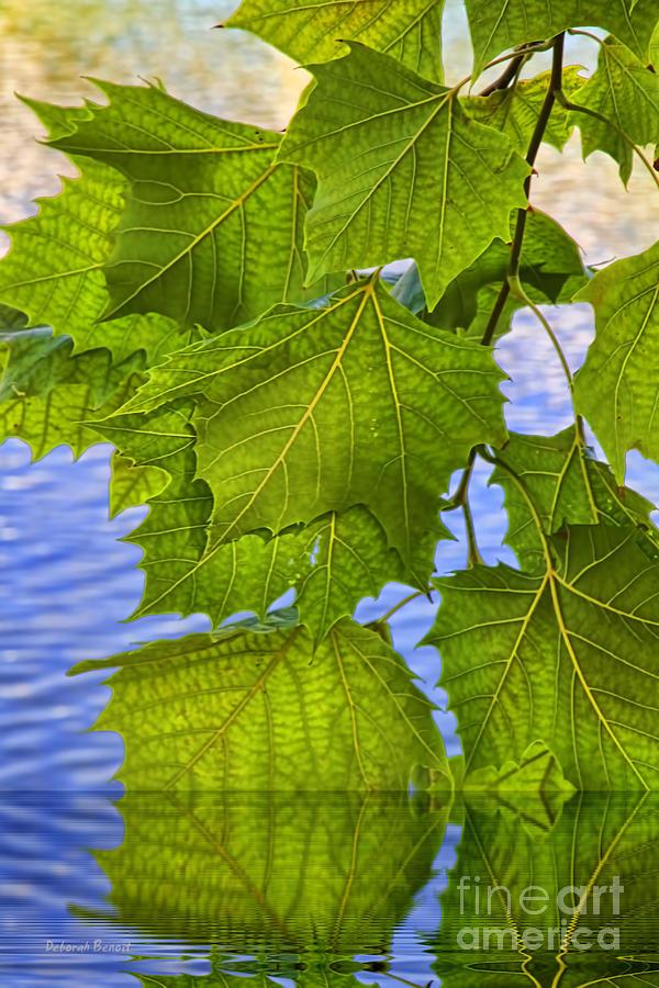 Leaves Photograph - Dangling Leaves by Deborah Benoit