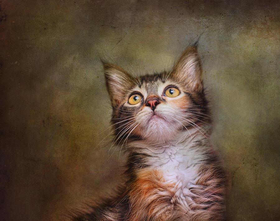 Cats Photograph - Daphne #2 by Pat Abbott