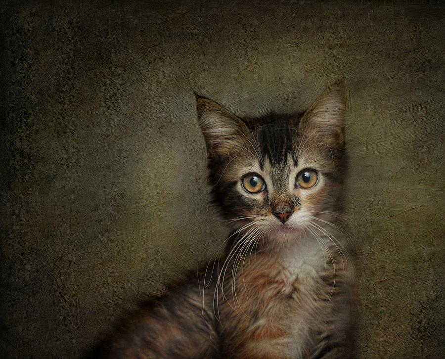 Kittens Photograph - Daphne by Pat Abbott