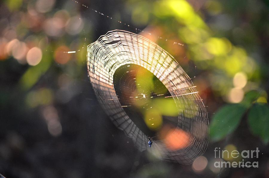 Dappled Photograph - Dappled Web Of Deceit by Maria Urso