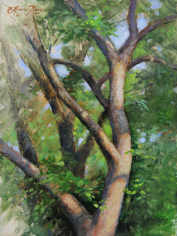 Tree Painting - Dappled Woods by Anna Rose Bain