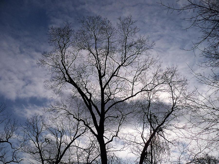 Trees Photograph - Dark And Stromy Night Trees by Corinne Elizabeth Cowherd