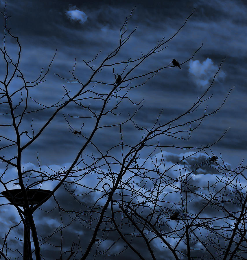 Branches Photograph - Darkblue by Amr Miqdadi