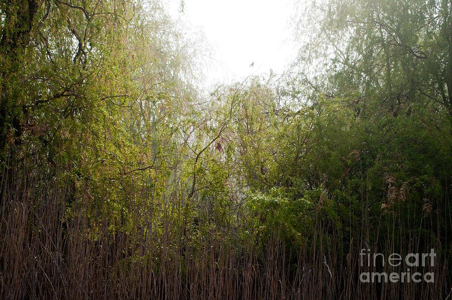Marsh Photograph - Darlington Park From Mclaughlin Bay by Gary Chapple