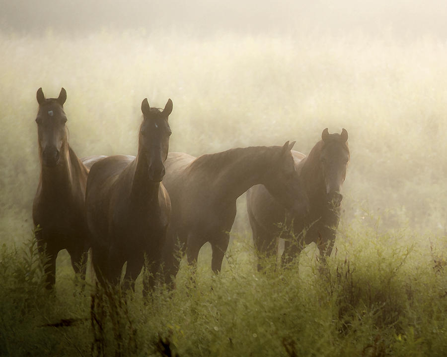 Horse Photograph - Daughters Of The Mist II by Ron  McGinnis