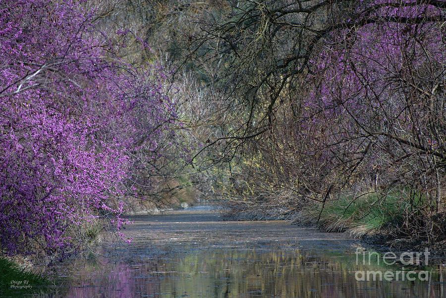 Davis Photograph - Davis Arboretum Creek by Diego Re
