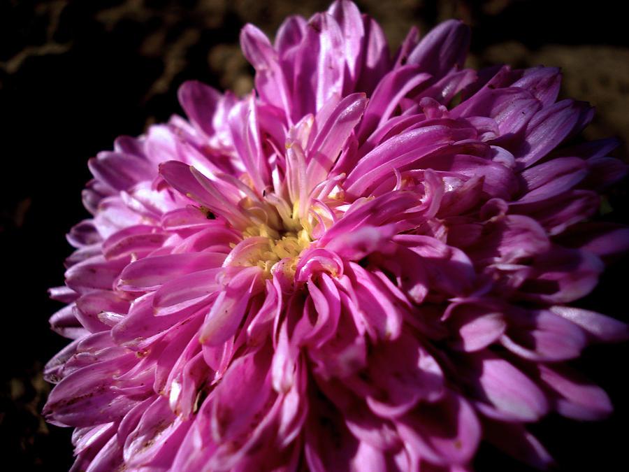 Flower Photograph - Dawn Flower by Sumit Mehndiratta