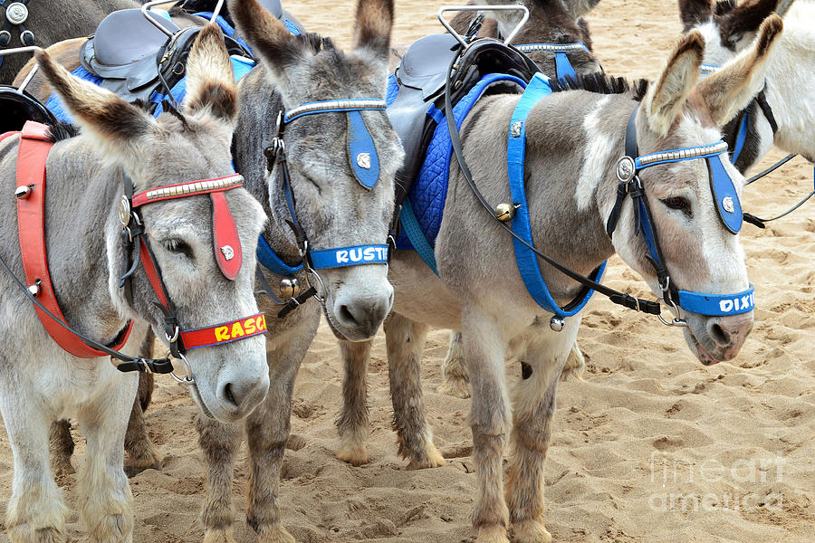 Donkey Photograph - Day At The Seaside by Andrew Barke