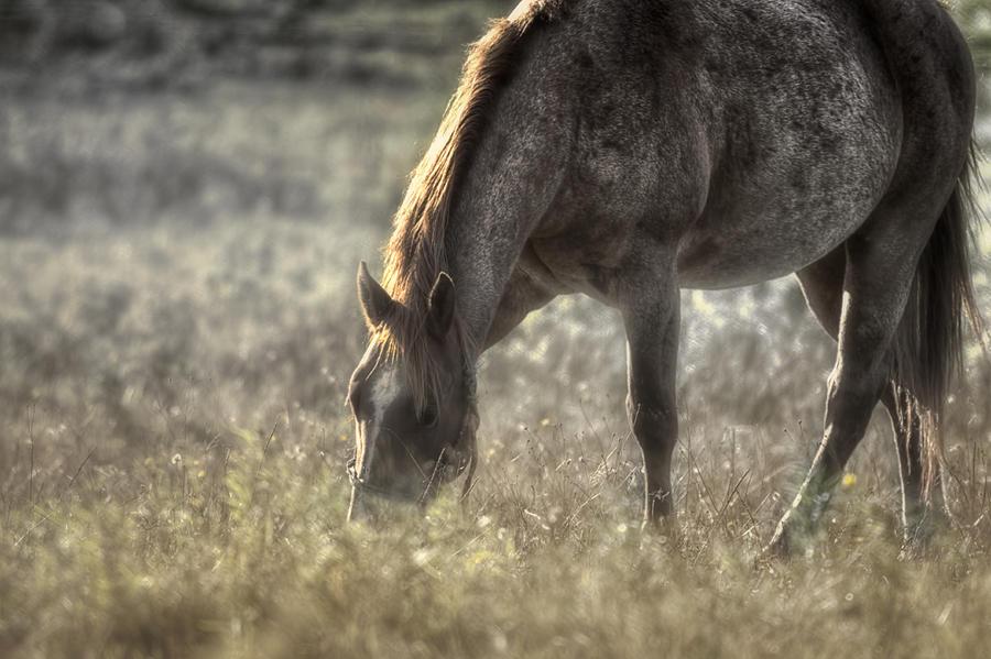 Horse Photograph - Day Graze by Gary Smith