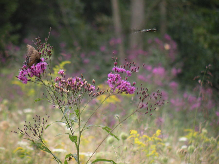 Dragonfly Photograph - Day In The Meadow by Trendle Ellwood
