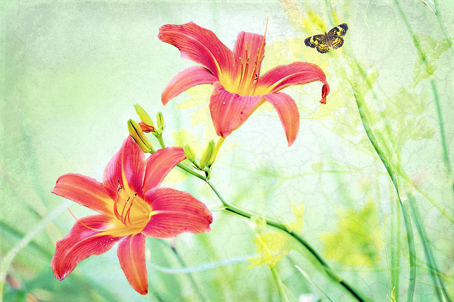 Daylily Photograph - Day Lily Delight by Bonnie Barry
