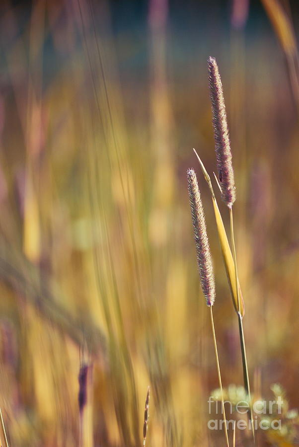 Weeds Photograph - Day Whisperings by Aimelle