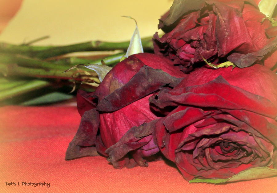 Roses Photograph - Days Gone By by Dorothy Hilde