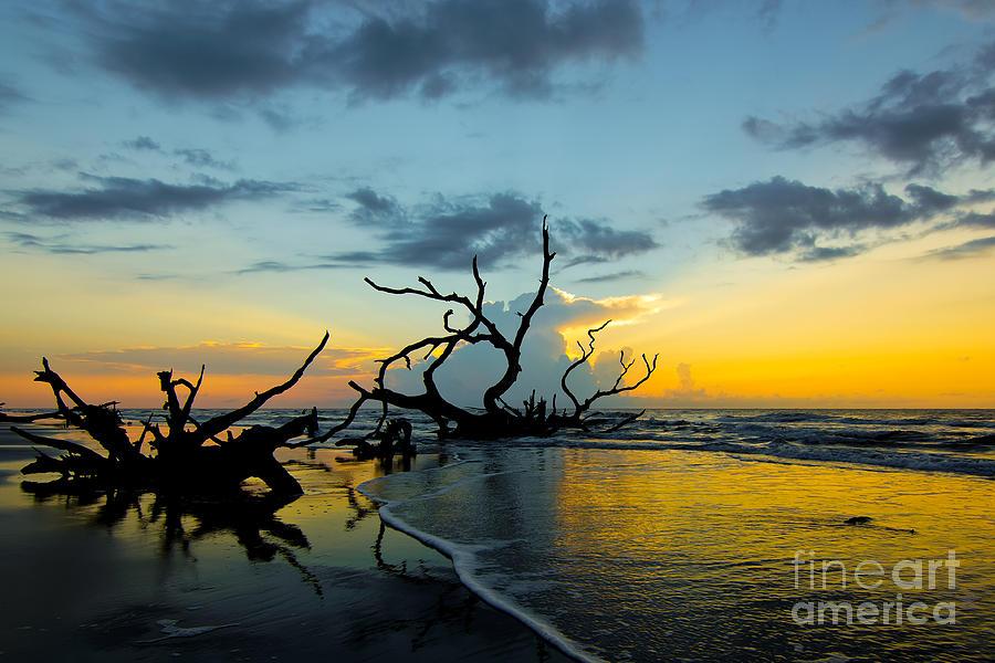 Sun Photograph - Dead Beach by Matthew Trudeau