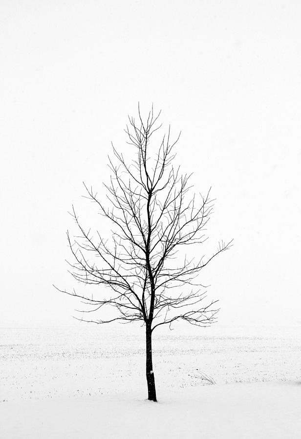 Lone Tree Photograph - Dead Of Winter by Doug Hockman Photography