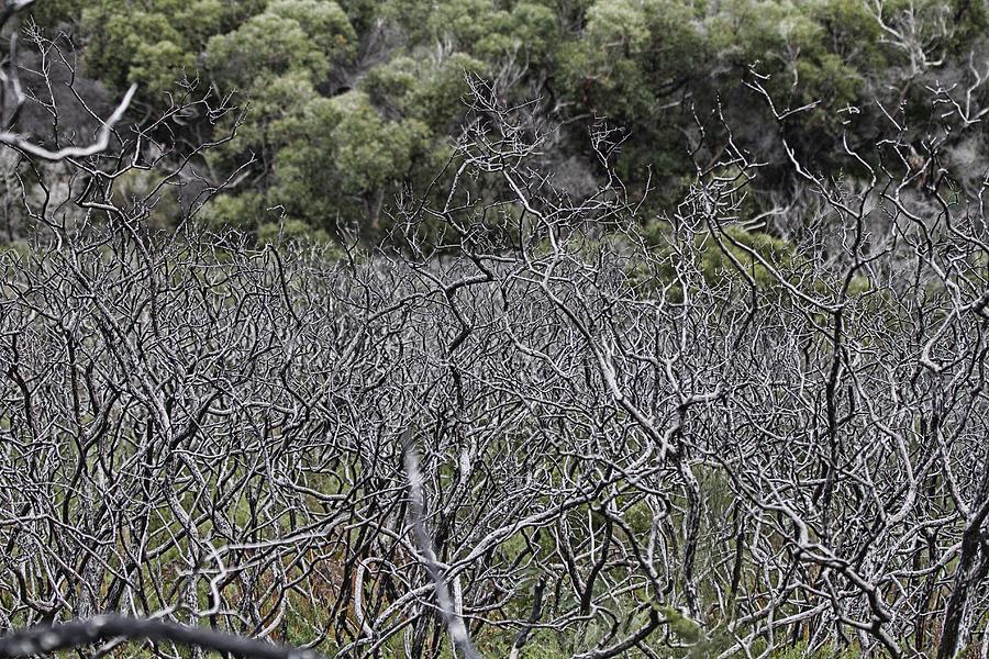 Dead Photograph - Dead Tree Garden by Douglas Barnard