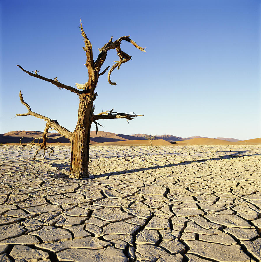 Dead Tree In Cracked Earth In Desert Photograph By Axiom