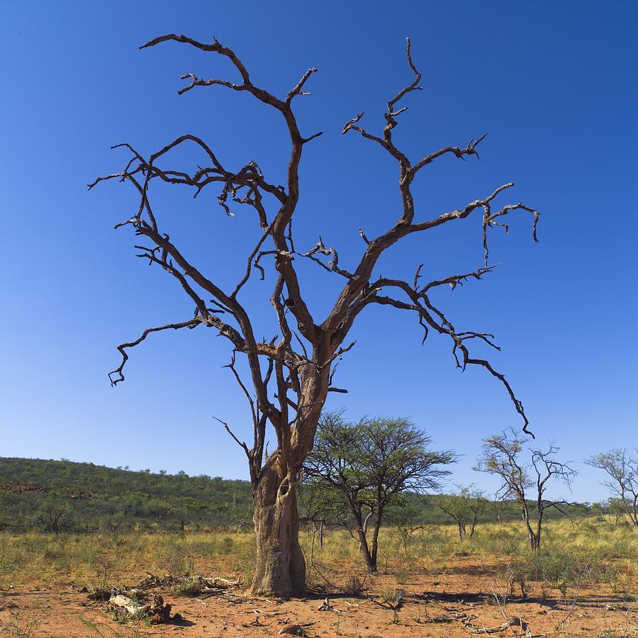 Killing a Tree Softly | Pitara Kids Network