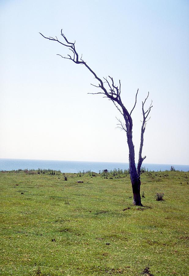Tree Photograph - Dead Tree by Victor De Schwanberg