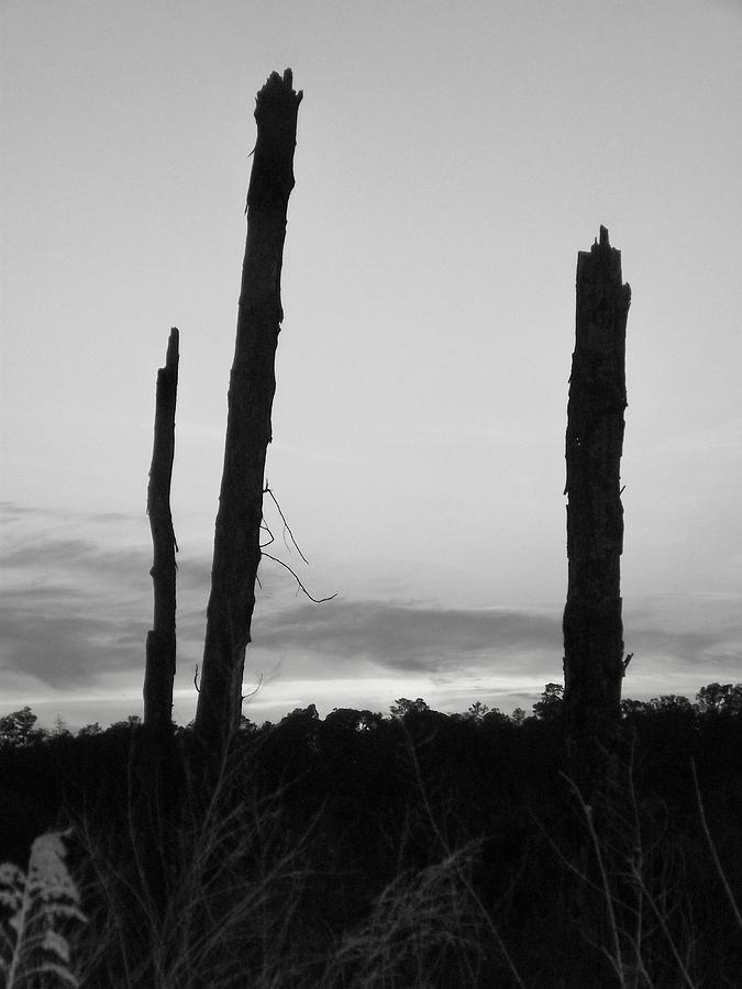 Nature Photograph - Dead Trees Against The Evening Skies by Floyd Smith