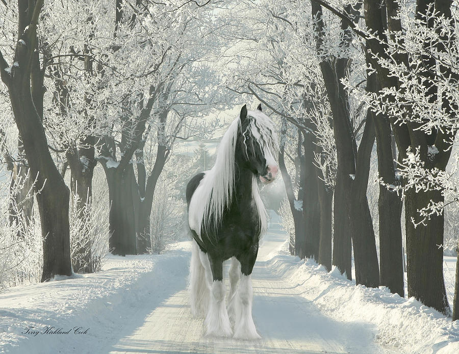 Equine Digital Art - December Morning by Terry Kirkland Cook