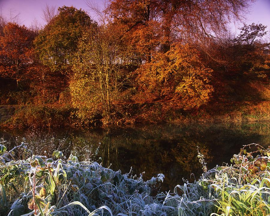 Autumn Photograph - Deciduous Woods, In Autumn With Frost by The Irish Image Collection
