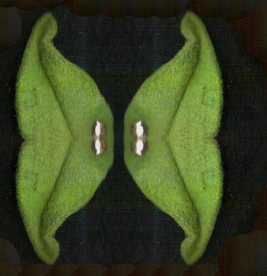 Butterfly Mixed Media - Decorative Green In The Dark by Pepita Selles