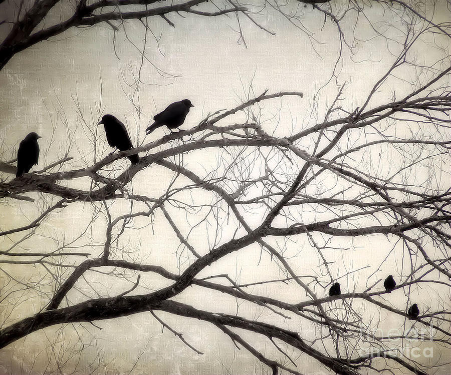Crows Photograph - Decree At Sunset by Angie Rea