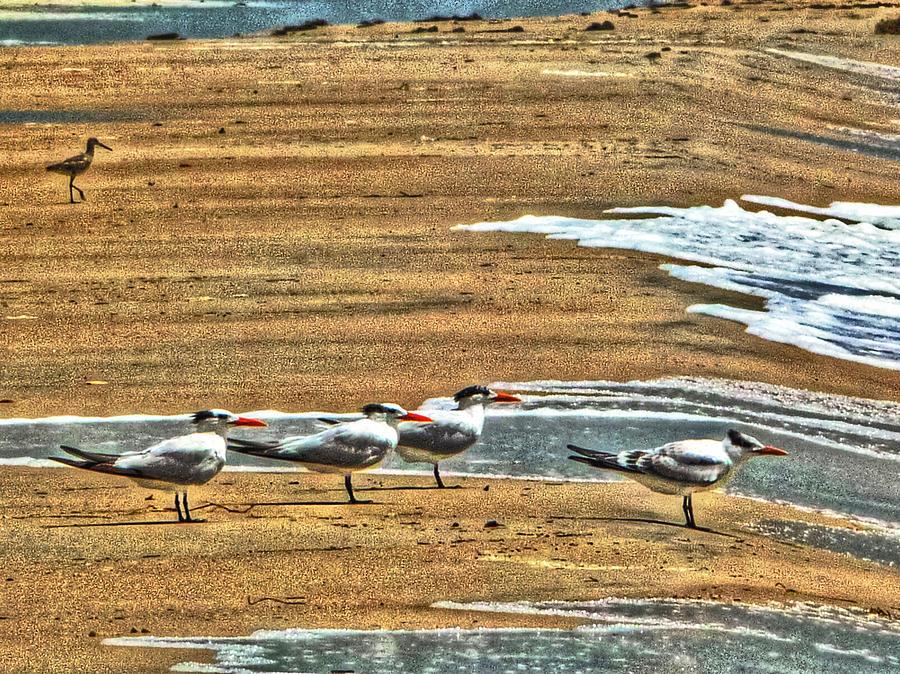 Tern Photograph - Dee-tern-mined by William Fields