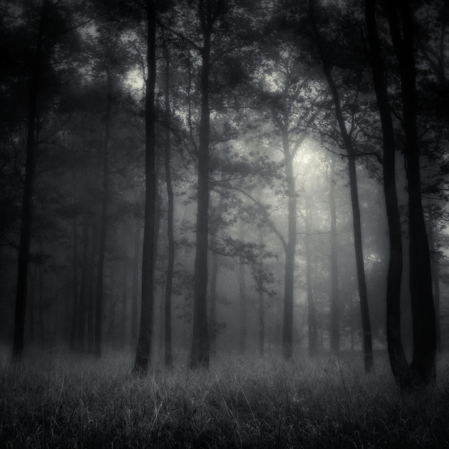 Forest Photograph - Deep Forest by Jaromir Hron