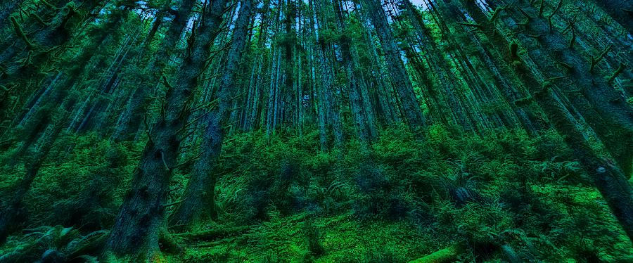 Trees Photograph - Deep Forest by Thomas Born