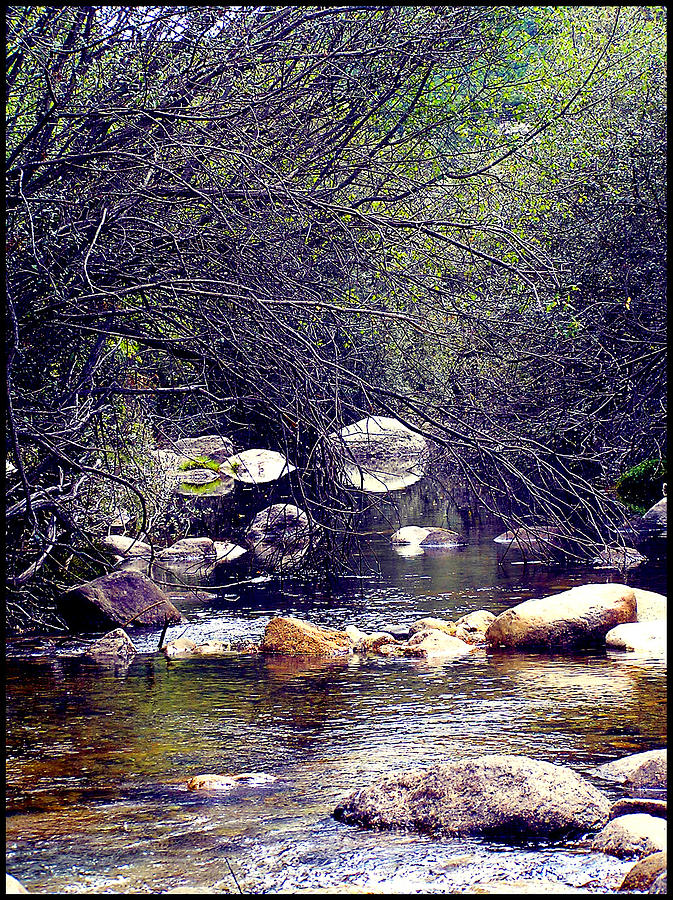 Water Photograph - Deep In The Forest by Guadalupe Nicole Barrionuevo
