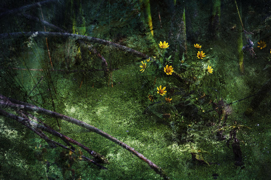 Wetland Photograph - Deep Into Nature by Bonnie Bruno