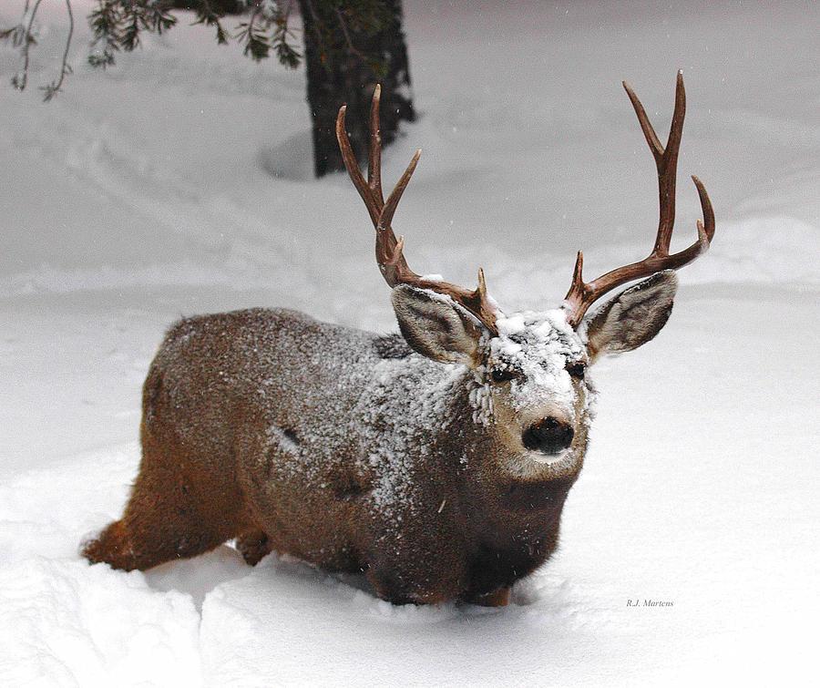 Buck Photograph - Deep by RJ Martens