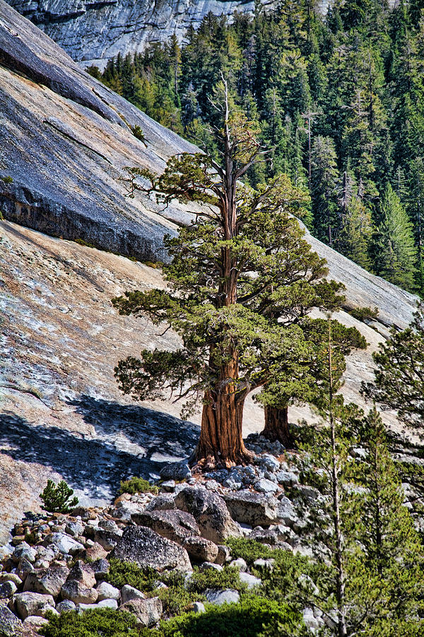 Rock Cliff Photograph - Deep Roots by Bonnie Bruno