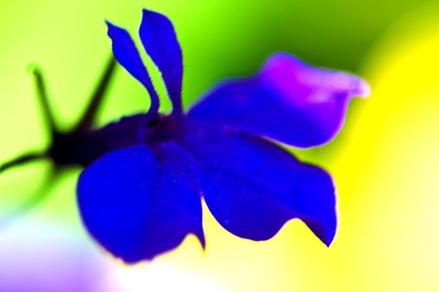 Blue Flower Photograph - Deeply Blue by Marie Jamieson