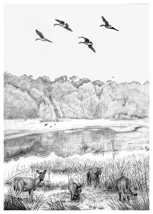 Deer Drawing - Deer And Geese - Lake Mattamuskeet by Tim Treadwell