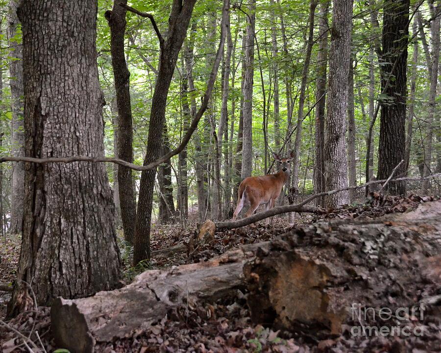 Deer Photograph - Deer In The Forest by Carol  Bradley