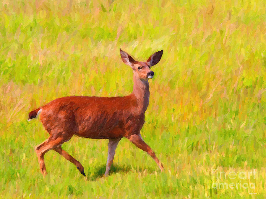 Animal Photograph - Deer In The Meadow by Wingsdomain Art and Photography