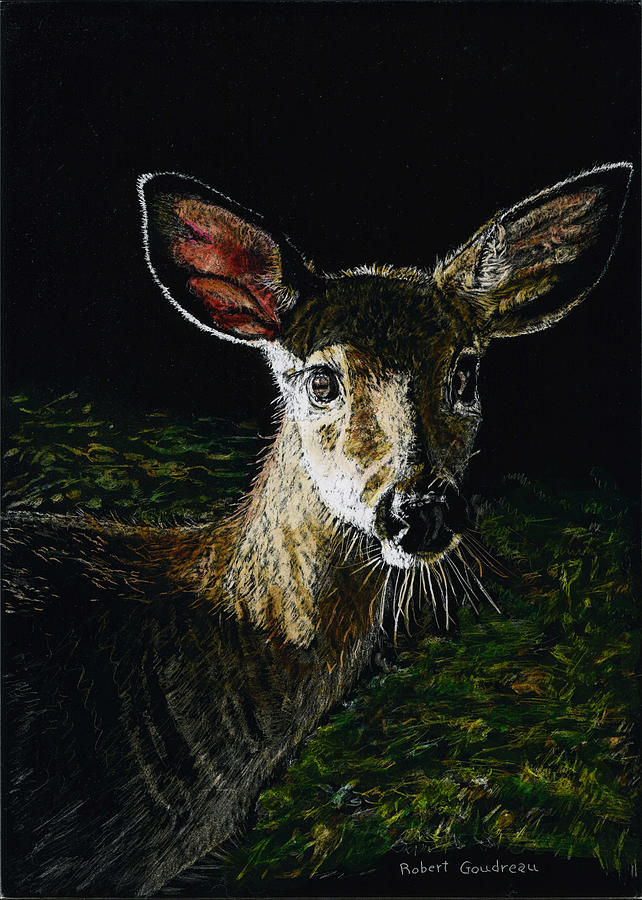 Deer Painting - Deer Portrait by Robert Goudreau