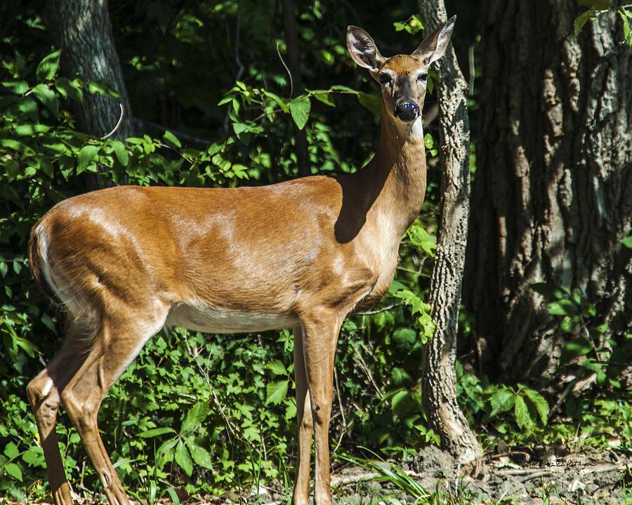 Heron Haven Photograph - Deer Surprise by Edward Peterson
