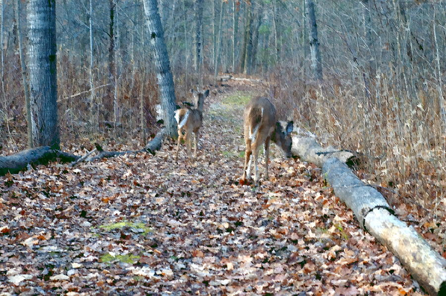 deer trail latin dating site The white-tailed deer (odocoileus virginianus), also known as the whitetail or virginia deer, is a medium-sized deer native to the united states, canada, mexico, central america, and south america as far south as peru and bolivia.