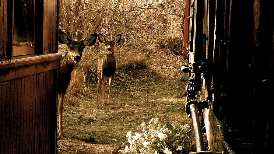 Deer Photograph - Deer Train Yard In Golden by Travis Burns