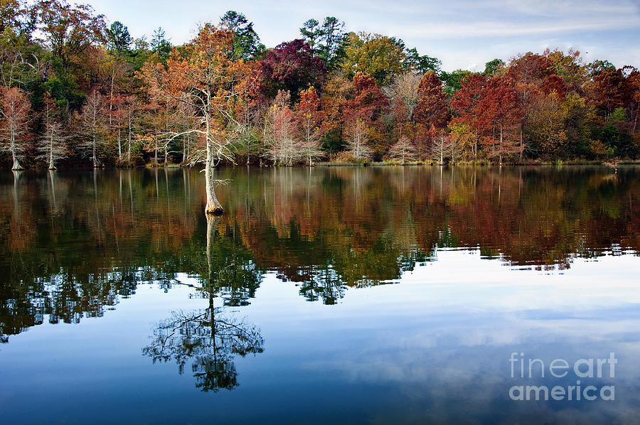 Trees Photograph - Beavers Bend Defiant Cypress by Tamyra Ayles