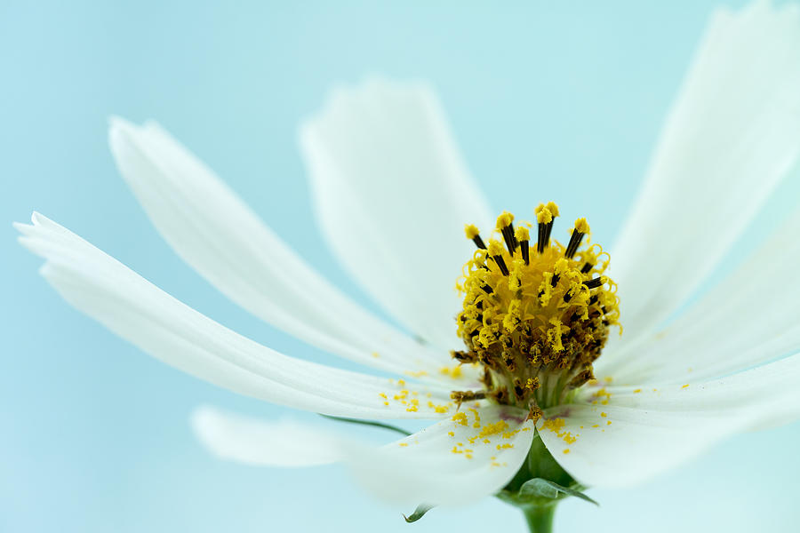 Blooming Flower Photograph - Delicate by Daniel Kulinski