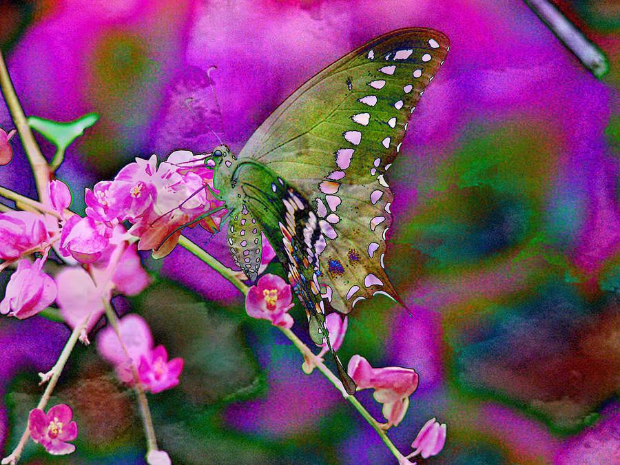 Butterfly Digital Art - Delicate by Ruth Kongaika